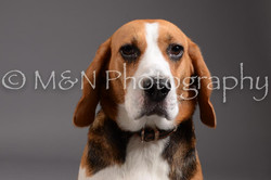 M&N Photography -DSC_2361