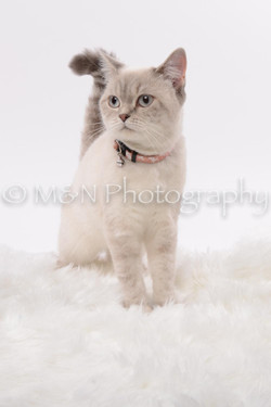 M&N Photography -DSC_8811
