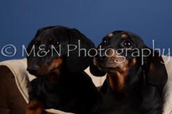 M&N Photography -DSC_5367