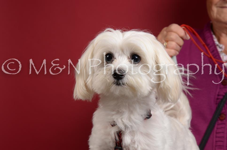 M&N Photography -DSC_3635