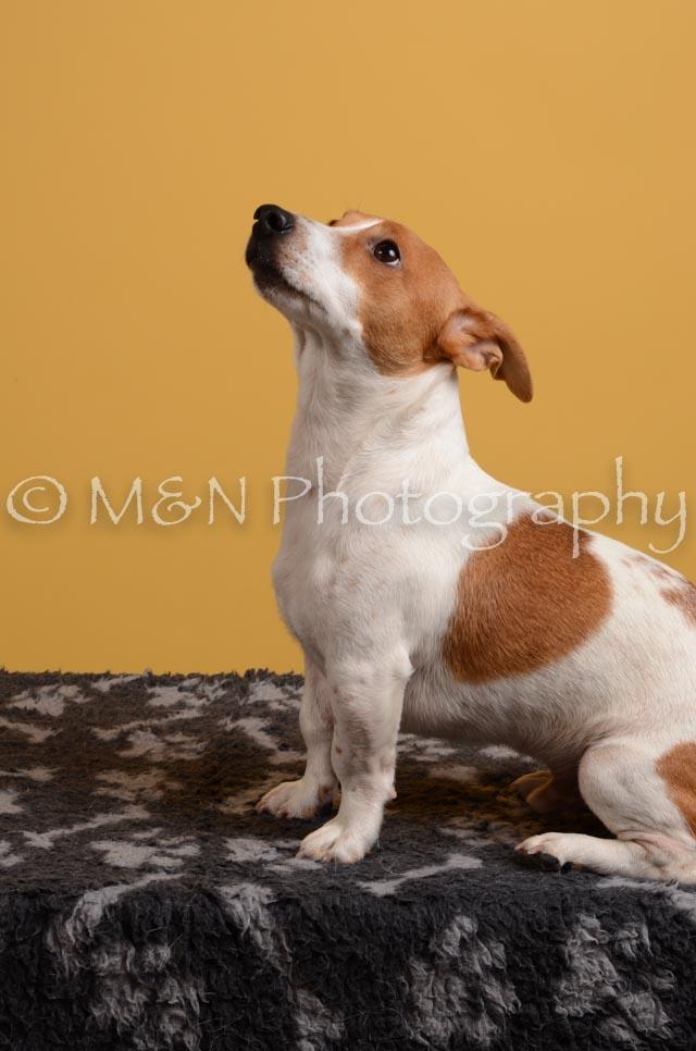 M&N Photography -DSC_4753