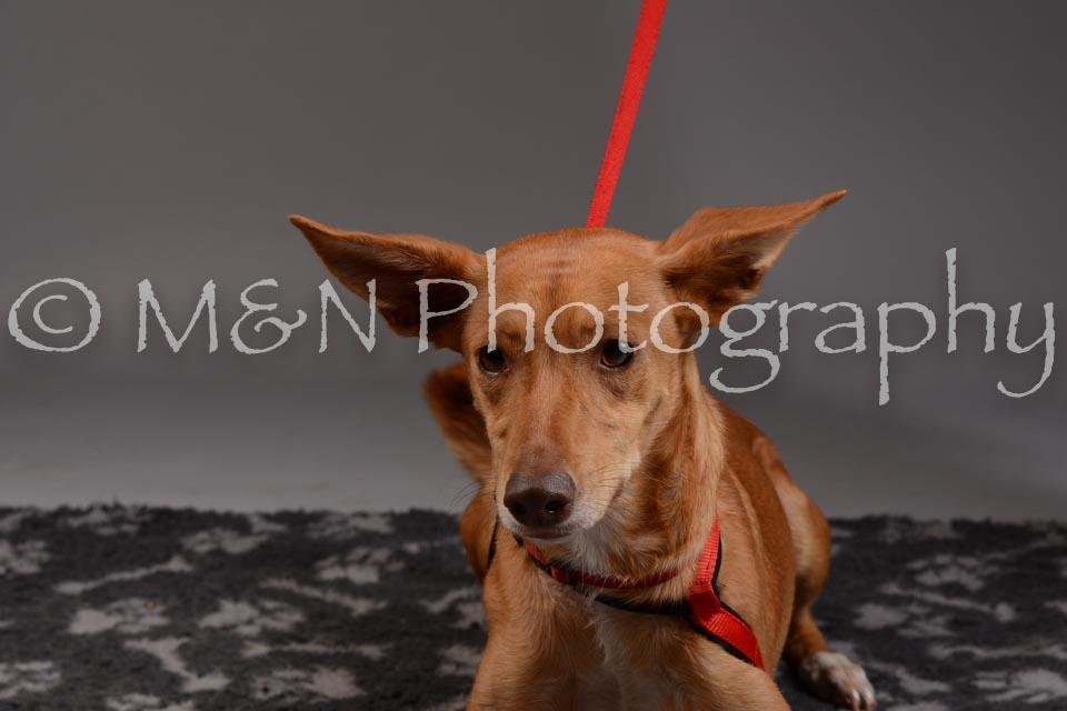 M&N Photography -DSC_1656