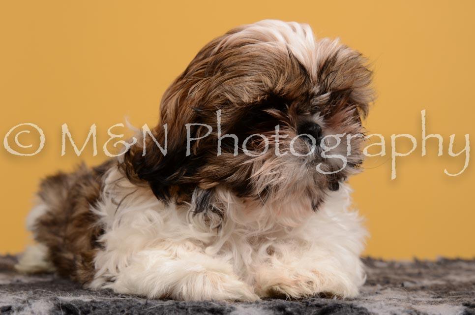 M&N Photography -DSC_4552