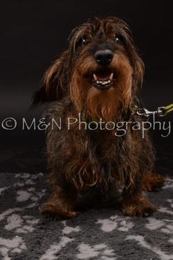 M&N Photography -DSC_9994