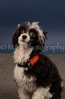 M&N Photography -DSC_4463