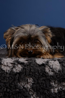 M&N Photography -DSC_5201
