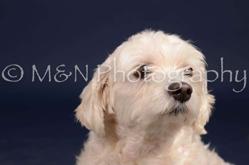 M&N Photography -DSC_0393