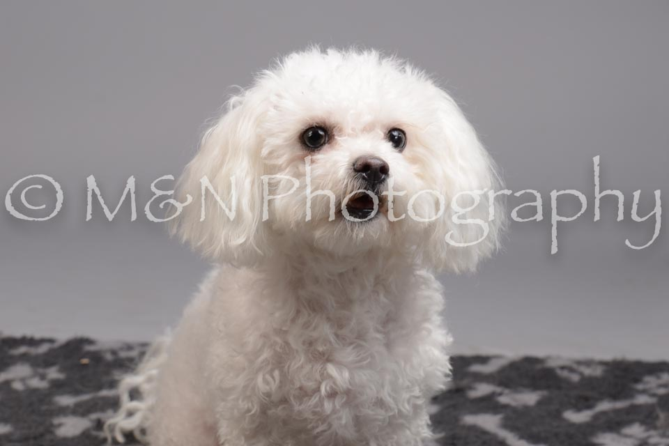 M&N Photography -DSC_2700
