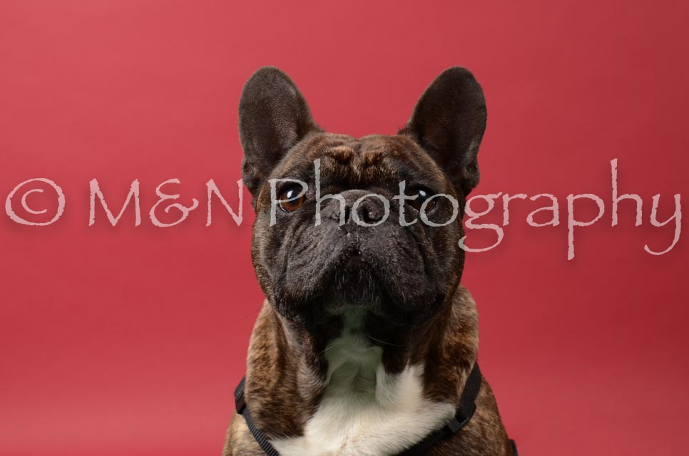 M&N Photography -DSC_6632