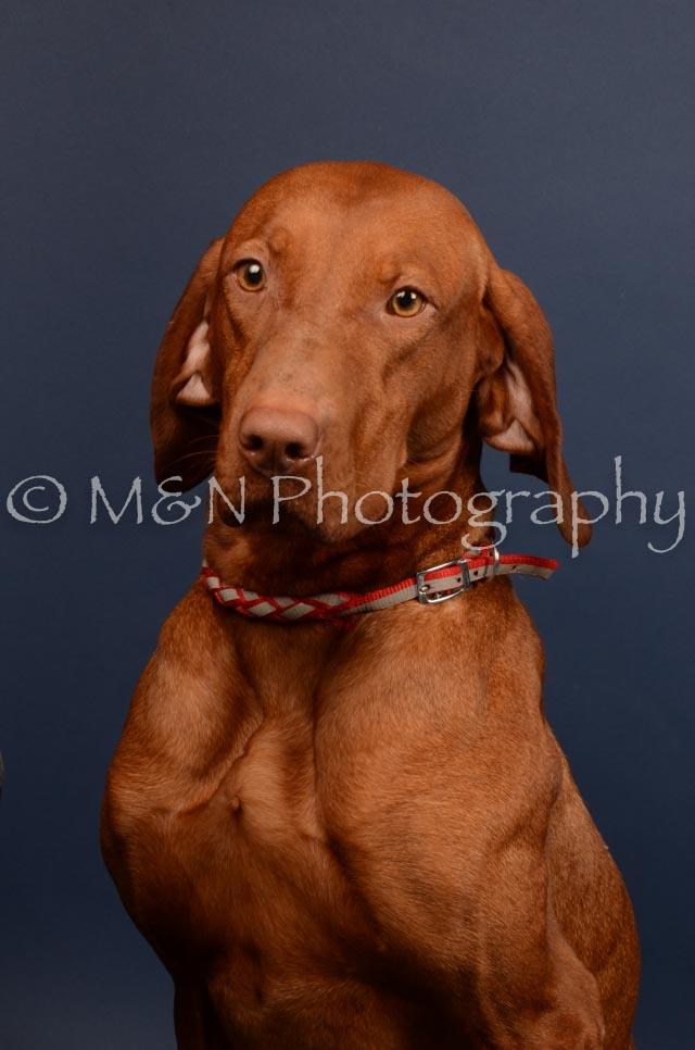 M&N Photography -DSC_4535