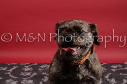 M&N Photography -DSC_8496