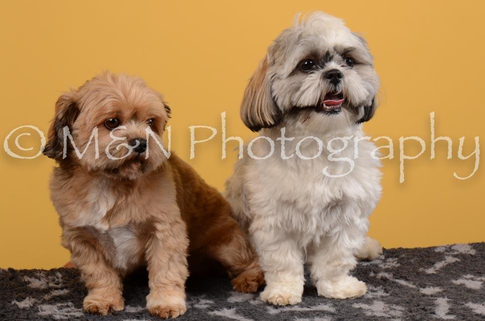 M&N Photography -DSC_4692