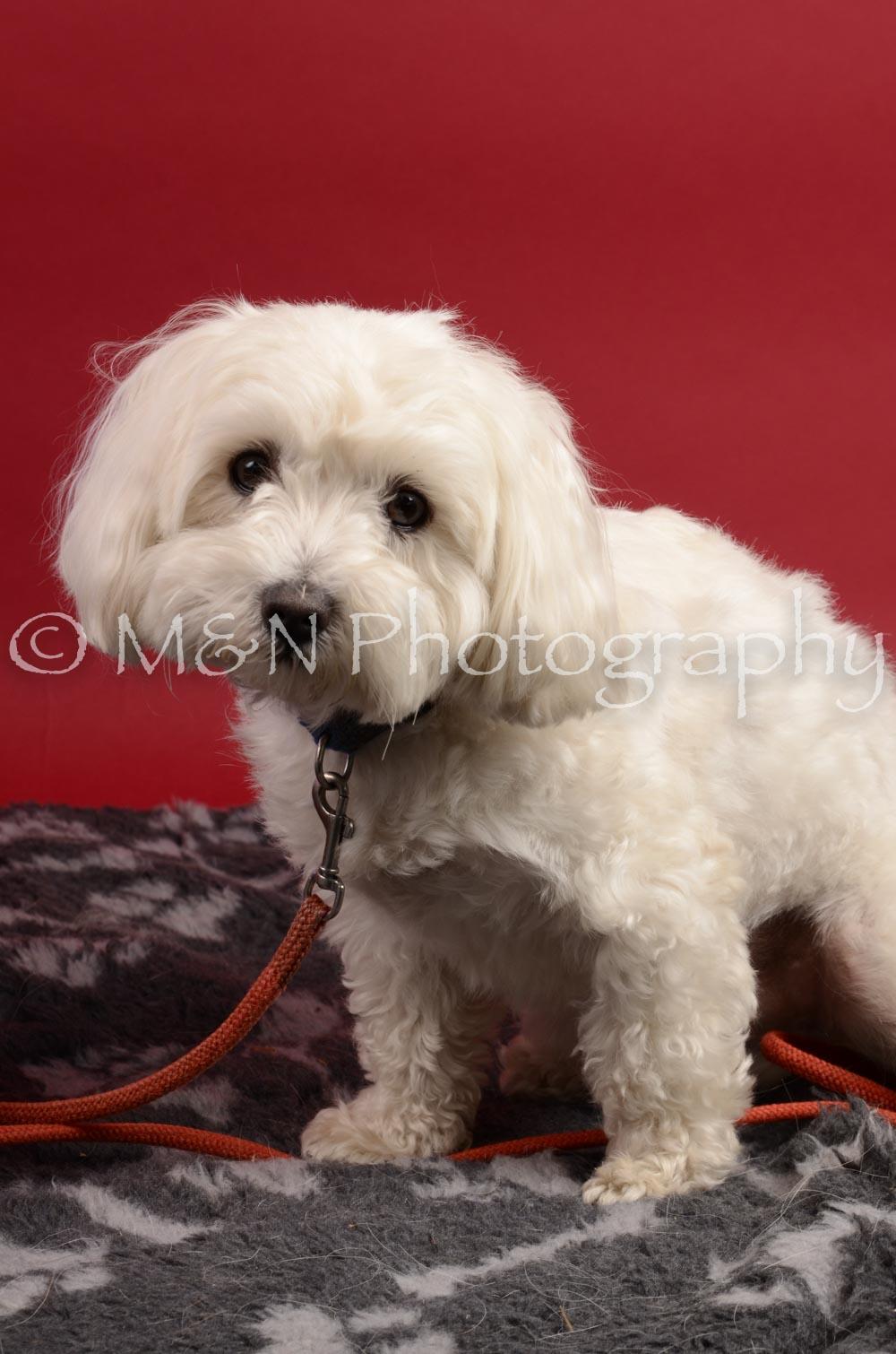 M&N Photography -DSC_8641