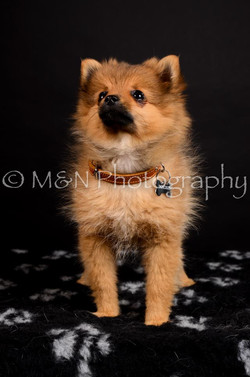 M&N Photography -DSC_5677