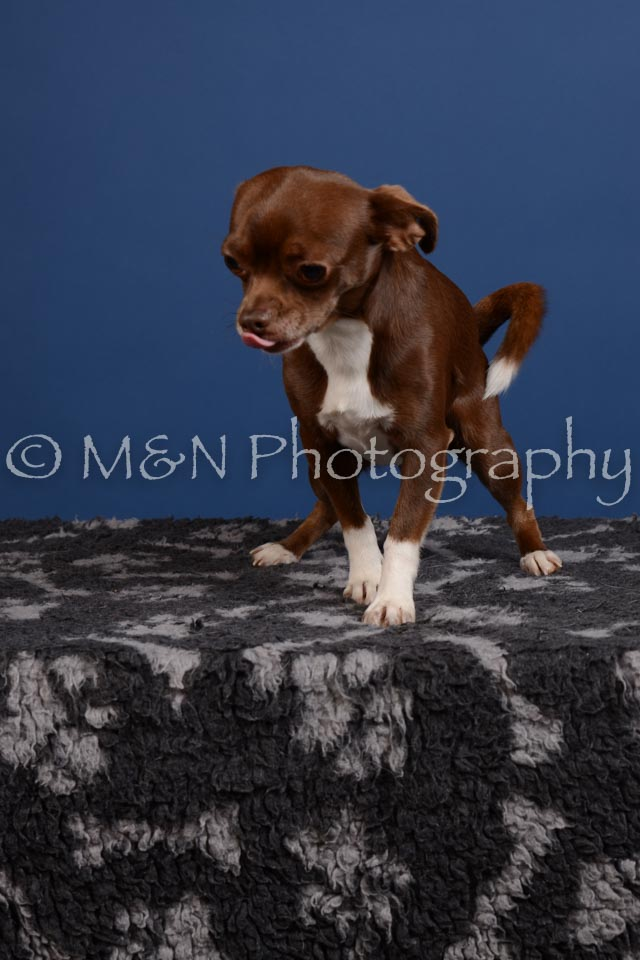 M&N Photography -DSC_5117