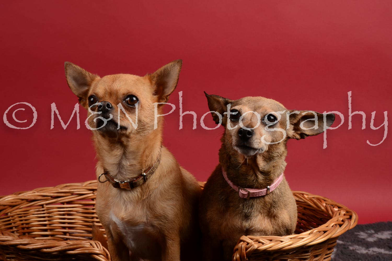 M&N Photography -DSC_8673
