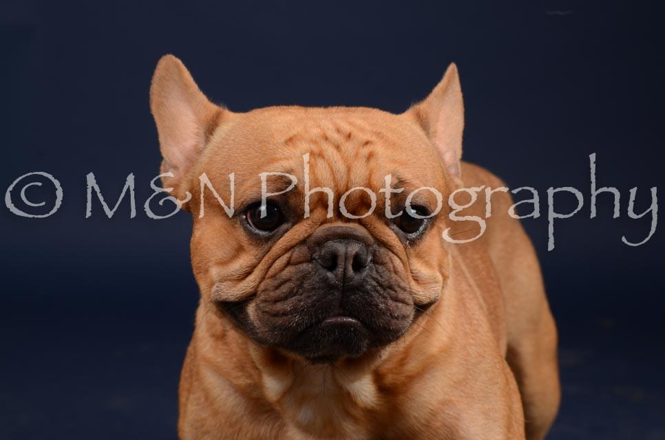 M&N Photography -DSC_0608
