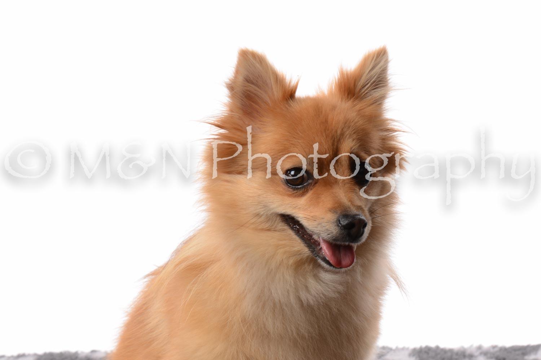 M&N Photography -DSC_8848