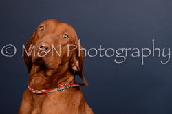 M&N Photography -DSC_4532
