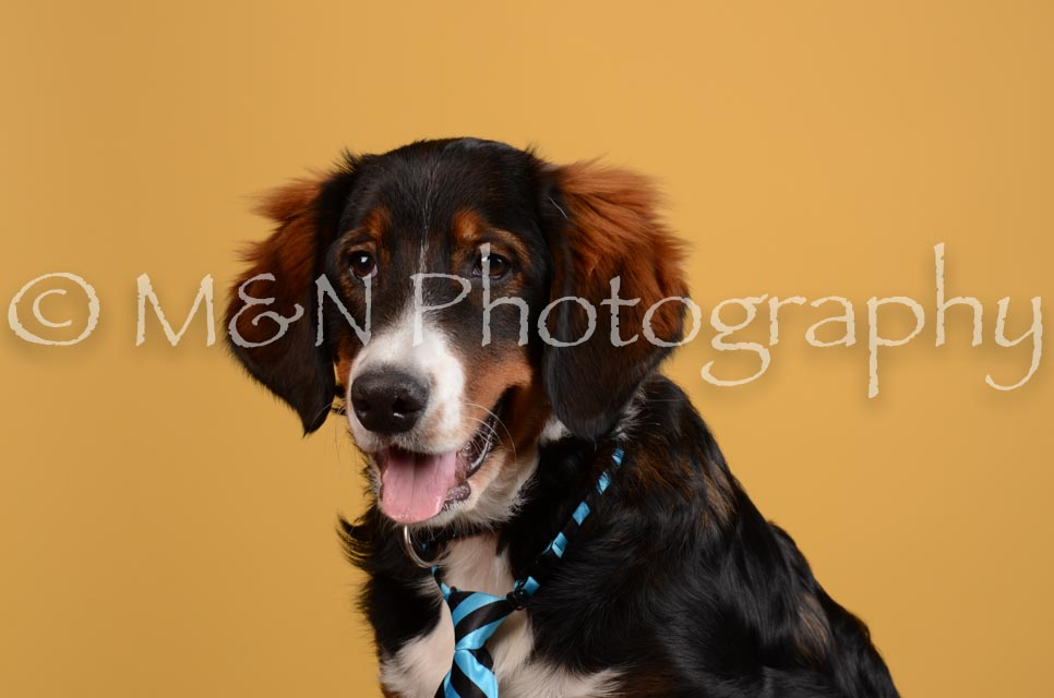M&N Photography -DSC_4570