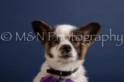 M&N Photography -DSC_3929