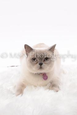 M&N Photography -DSC_8793