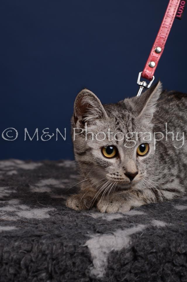 M&N Photography -DSC_4269