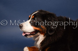 M&N Photography -DSC_3806