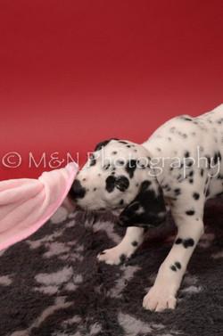 M&N Photography -DSC_6805