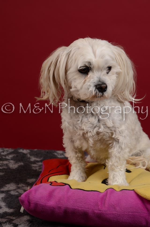 M&N Photography -DSC_3584