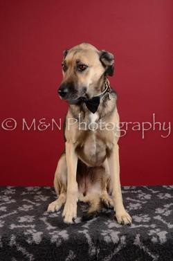 M&N Photography -DSC_3489