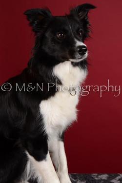 M&N Photography -DSC_3047