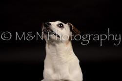 M&N Photography -DSC_0096