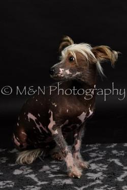 M&N Photography -DSC_2498