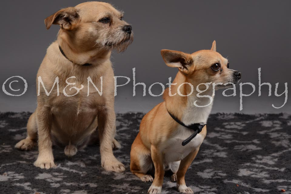 M&N Photography -DSC_2178