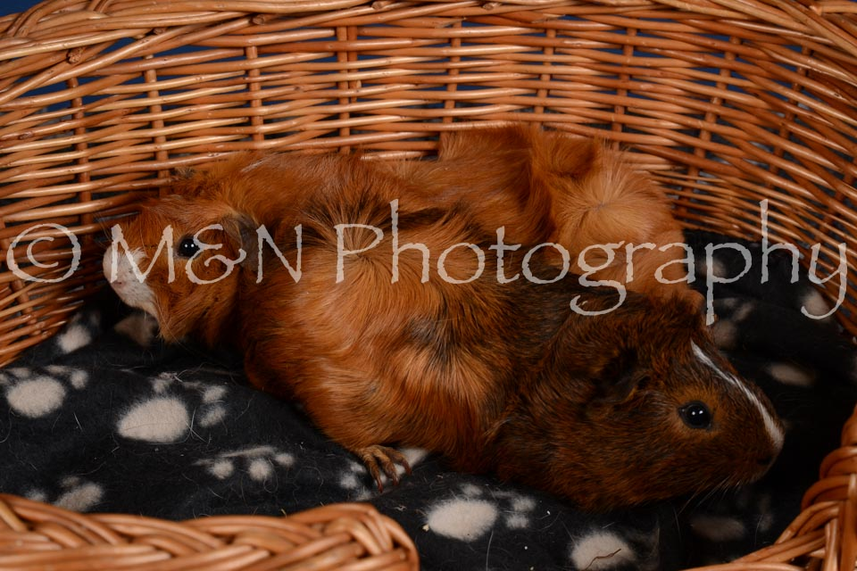 M&N Photography -DSC_5087