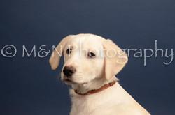 M&N Photography -DSC_4389