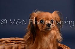 M&N Photography -DSC_0269