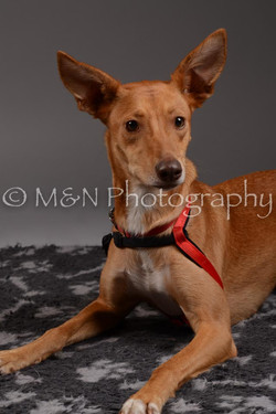 M&N Photography -DSC_1651