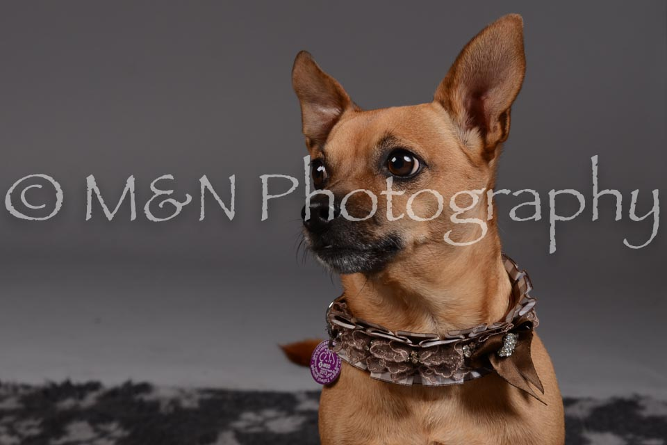 M&N Photography -DSC_2233