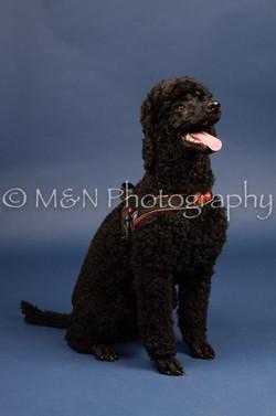 M&N Photography -DSC_3965