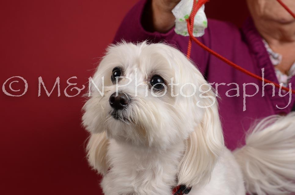M&N Photography -DSC_3633