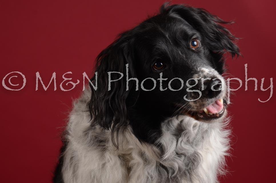 M&N Photography -DSC_3319