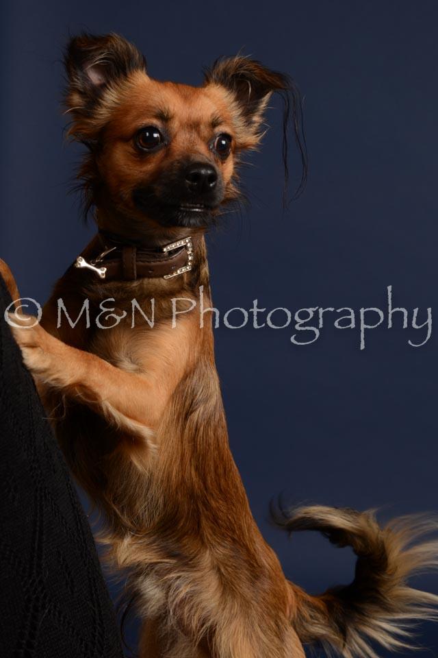 M&N Photography -DSC_0478