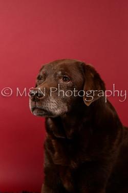 M&N Photography -DSC_6617