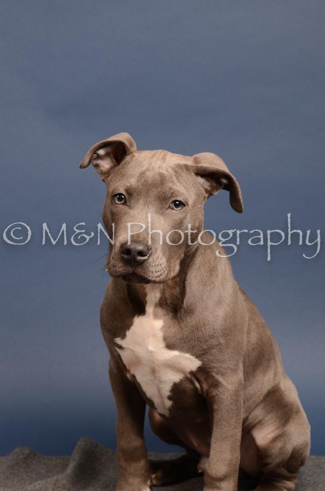 M&N Photography -DSC_4315