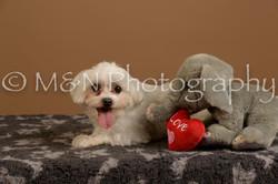 M&N Photography -_SNB0804