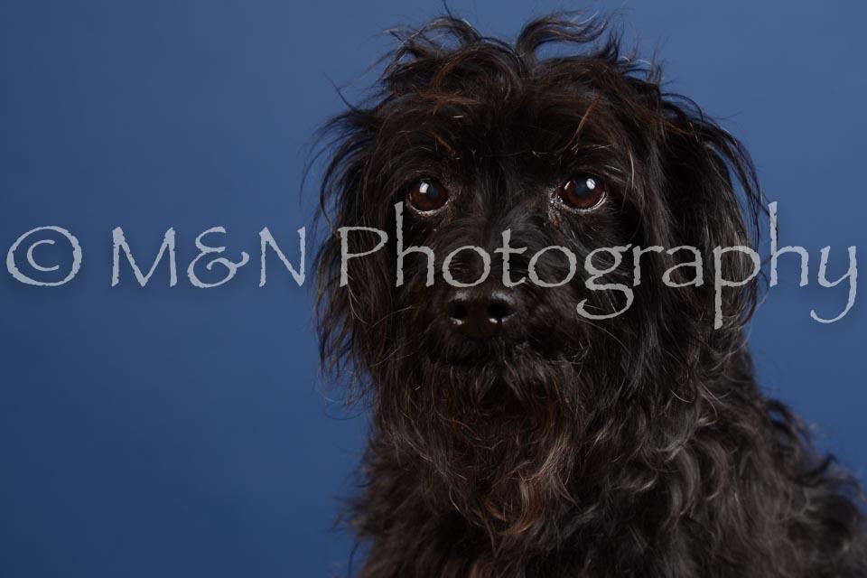 M&N Photography -DSC_4995