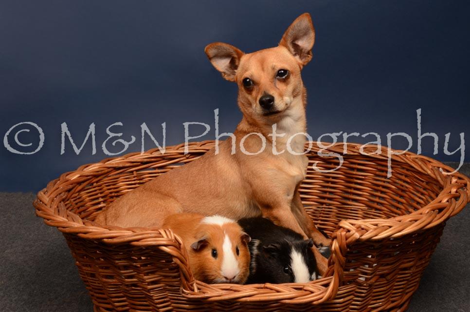 M&N Photography -DSC_4750