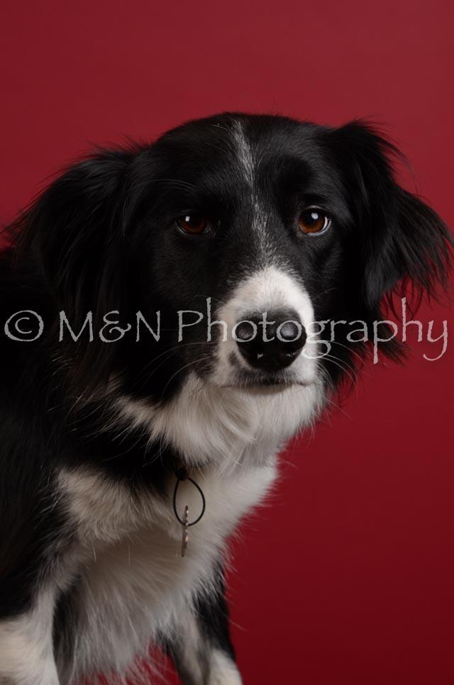 M&N Photography -DSC_3456